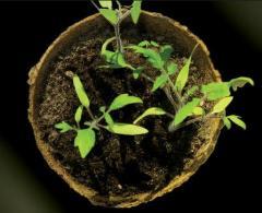 Fertilizers for garden