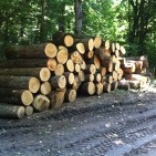 Добив на дърва