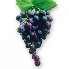 Vine saplings average grades