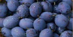 Сини сливи сорт  Йо-Йо