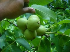 Nuts paste