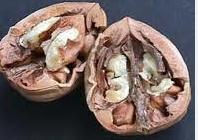 Орехи биопроизводство