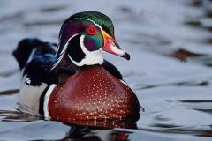 Decorative ducks
