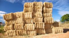 Пшенична слама