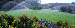 Automatic watering system
