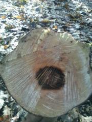 Дървен материал за музикални и инструменти