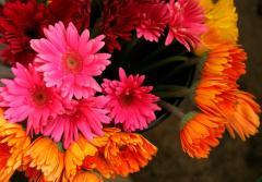 Онлайн магазин за цветя Top Flowers