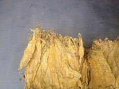 Raw materials for the tobacco industry