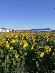 Ферма за щрауси