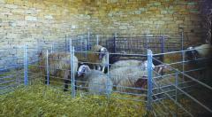 Модулна преграда за овце - 1,80м/1,00м