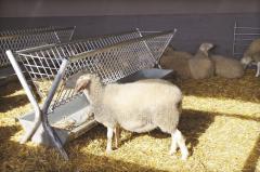 Двустранна хранилка за овце и кози