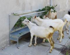 Стенна хранилка за овце и кози