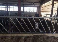 Хранителни решетки за крави - 5М