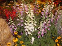 Производство на декоративна растителност