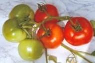 Семена от домати БАЛКАН F1 (Tm, V)