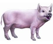 Фураж за прасета бозайници