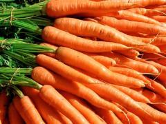 Морков сорт ДОРДОНЕ