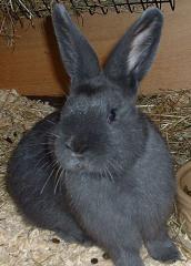 Комбиниран фураж за зайци