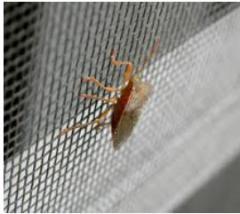 Статични комарници