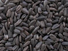 Слънчогледови семки черни