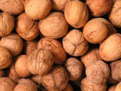 Walnut seedlings