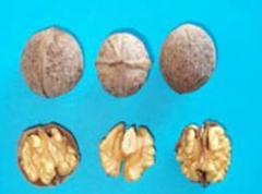 Орехи Биледжик