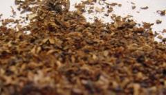 Тютюн за пушене / Tobacco Type Virginia on leaves