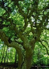 Дърва от Габър
