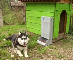 Автоматизирани хранилки за кучета