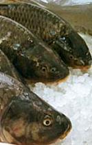 Риба замръзена