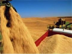 Отглеждане на зърнени култури