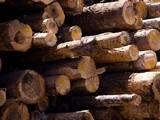 Иглолистен дървен материал