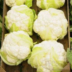 Seeds of cauliflower