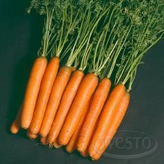 Морков Nanda F1 (Нанда F1) 100 000 семена