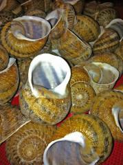 Snails caviar