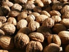 Черупки от орехи