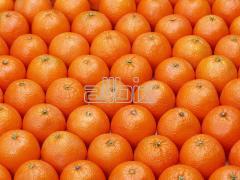 Търговия с портокали