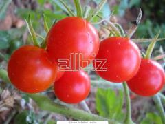 Фунгициди за  защита на растения