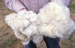 Вълна овча