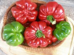 Семена чушки Български Ратунд