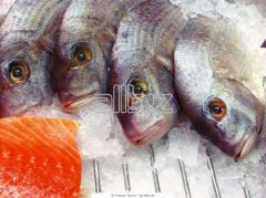 Риба замразена