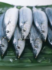 Риба прясна