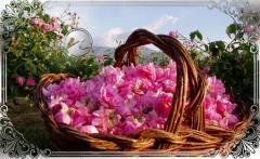 Розово масло, козметика, био органичен продукт