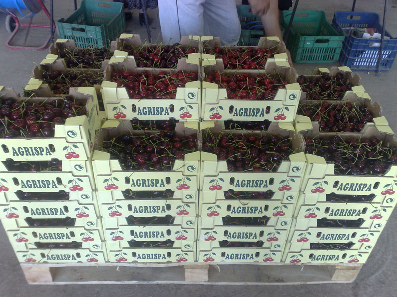 Cherries Line, GROUP, Кюстендил