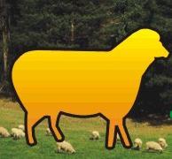 Национална Овцевъдна Асоциация, Шумен