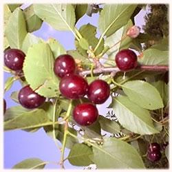 Агротрейд, Овощен разсадник, Сливен