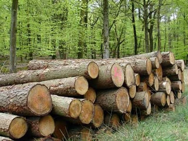 Руен лес, ЕООД, Бургас