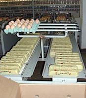 Поръчка Консумативни яйца