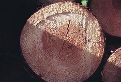 Поръчка Закупуване на дървесина