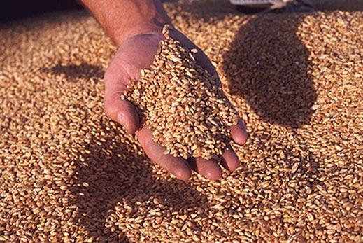 Поръчка Съхранение на зърно